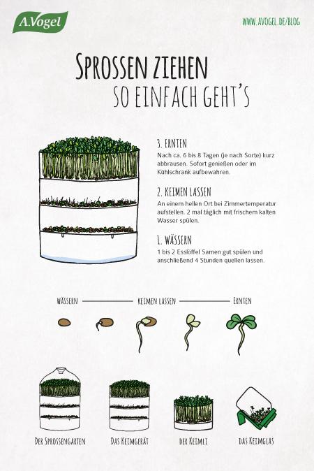 sprossen ziehen und schmecken greens in a jar a very vegan life. Black Bedroom Furniture Sets. Home Design Ideas